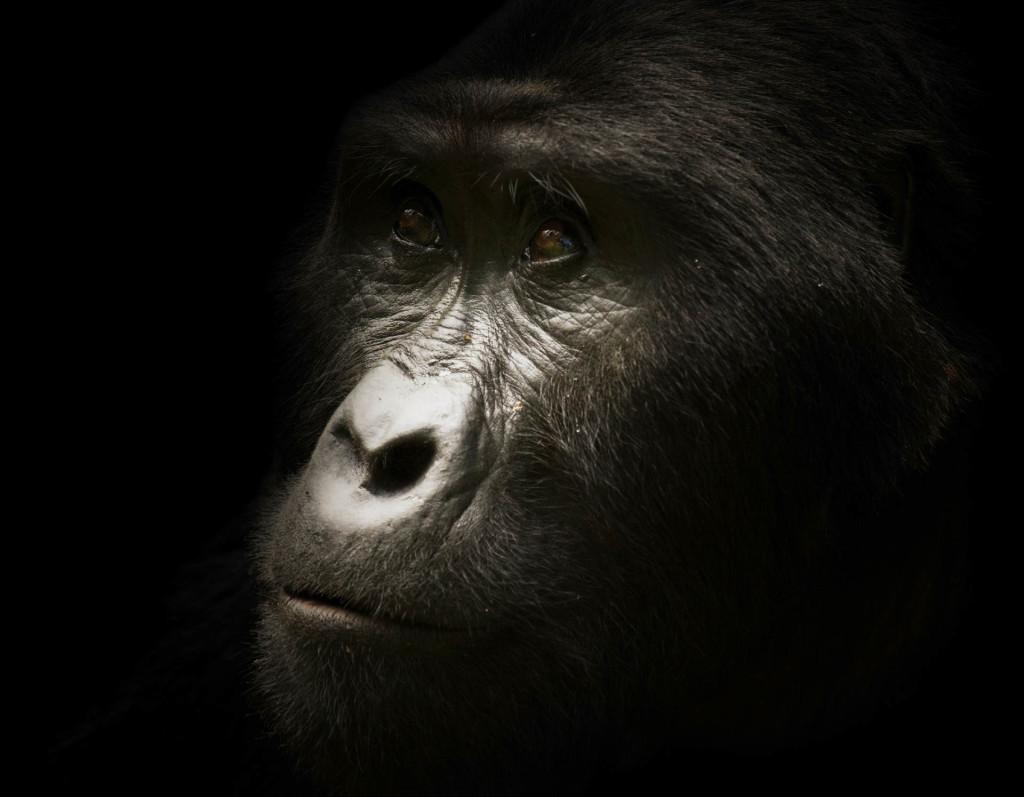 Animals_4611-1024x797.jpg